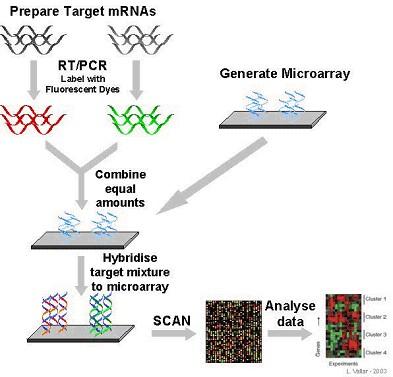 gene expression hereditary fructose intolerance (hfi